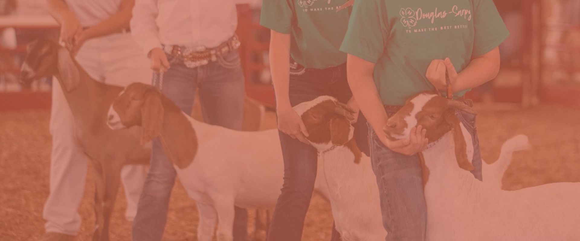 4-H Open Class image