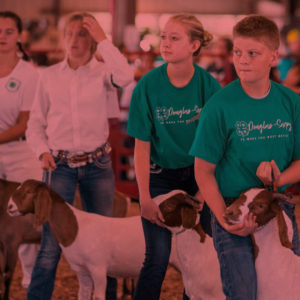 4-H at the Sarpy County Fair image
